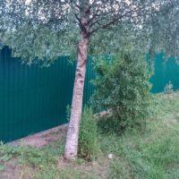 Забор из зеленого профнастила для дачи
